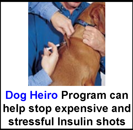 how to give sulfur to dogs