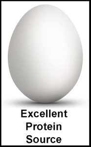 Egg-Excellent Protein Source