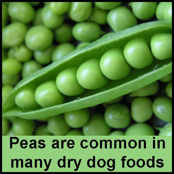 Peas And Lentils In Dog Food