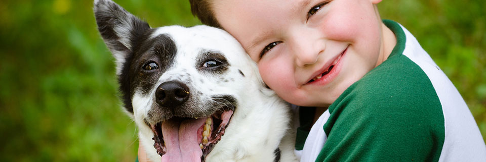 How can Heiro for Dogs help my dog's skin and dog's ear problems?