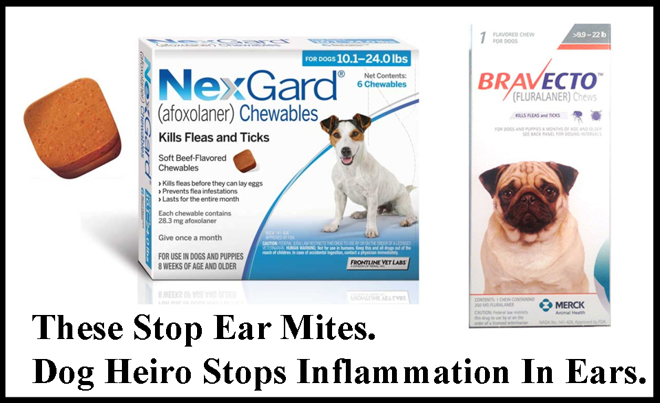 Ear Mites In Dogs Treatment Cost