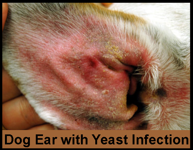 What S In Dog Food That Can Cause Yeast Infection