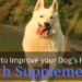 improve your dogs health with supplements