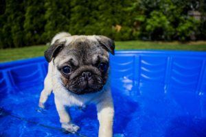 Ways to keep your dog cool in the summer