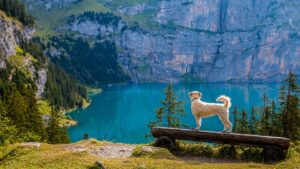 Hiking, ways to exercise with your dog