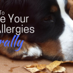 dog allergy relief