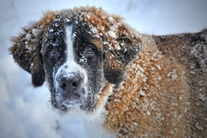 Creative Fitness Tips for Your Dog During the Winter